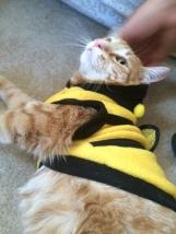 Bee Lovin